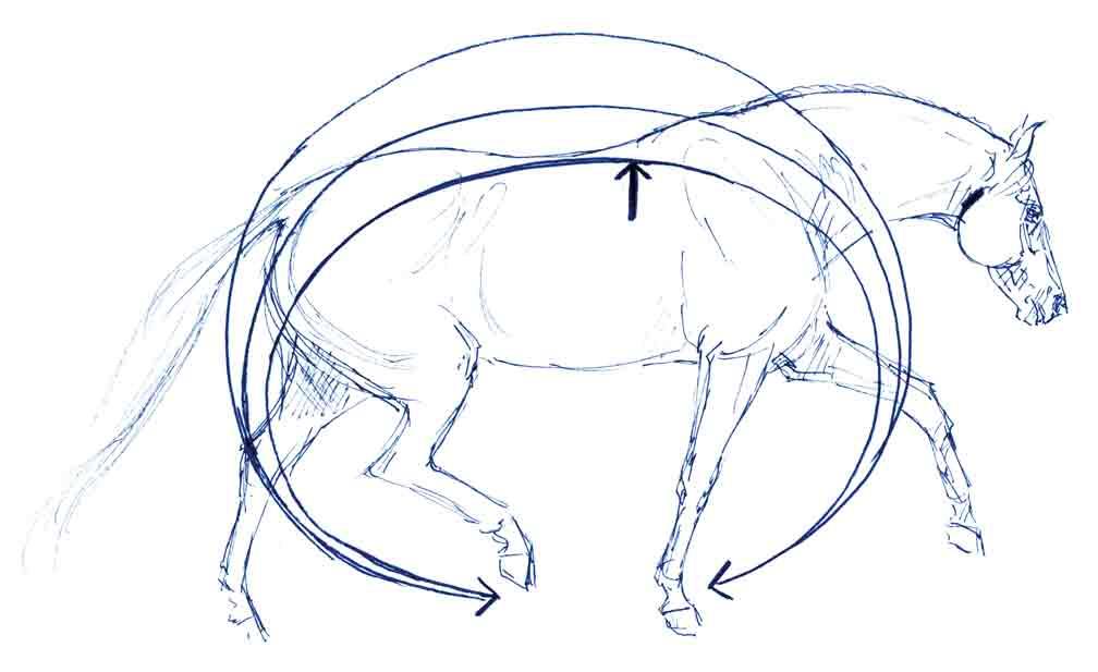 Wellenbewegung-pferd