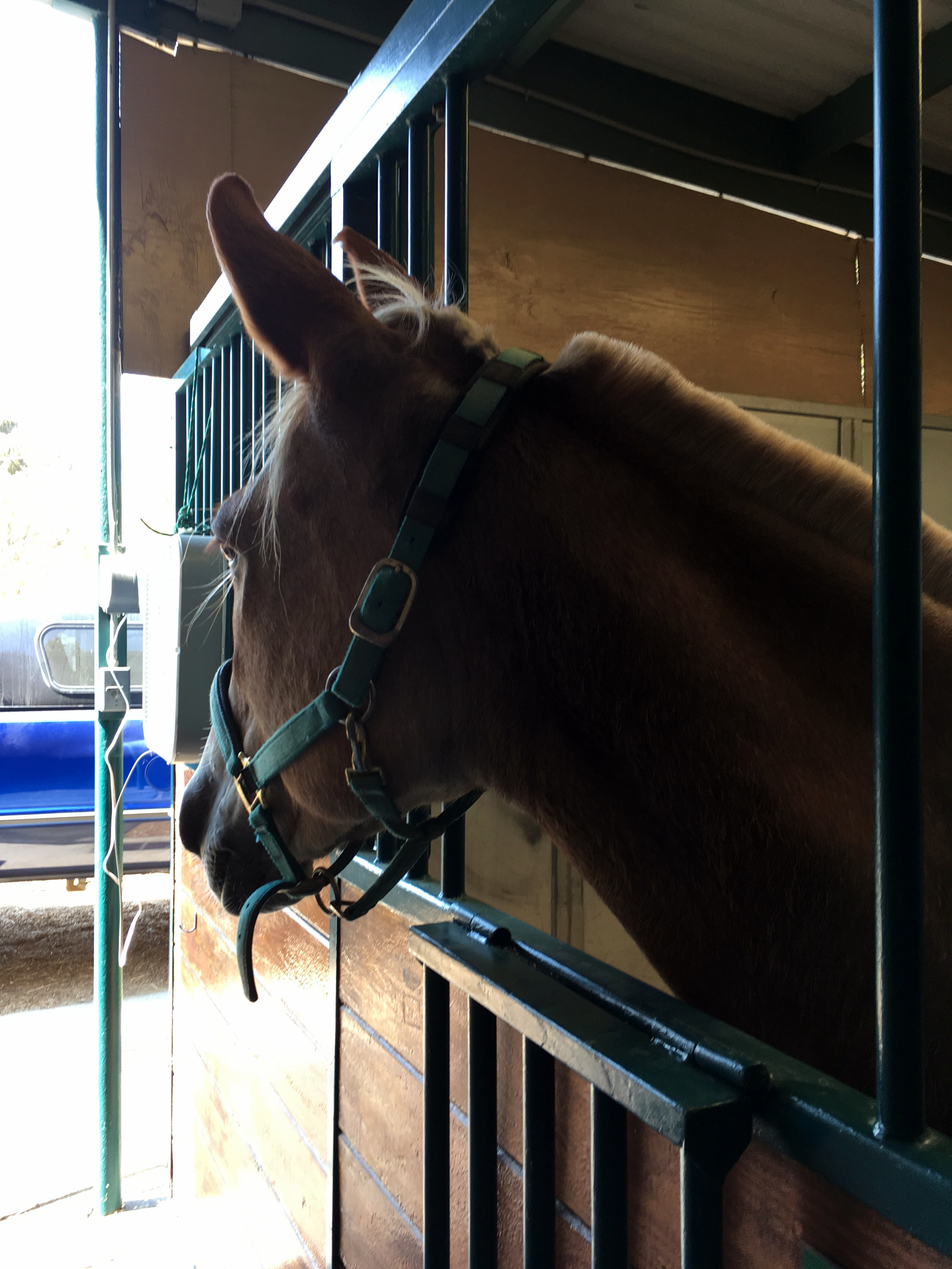 Nilla in her stall at the vet's