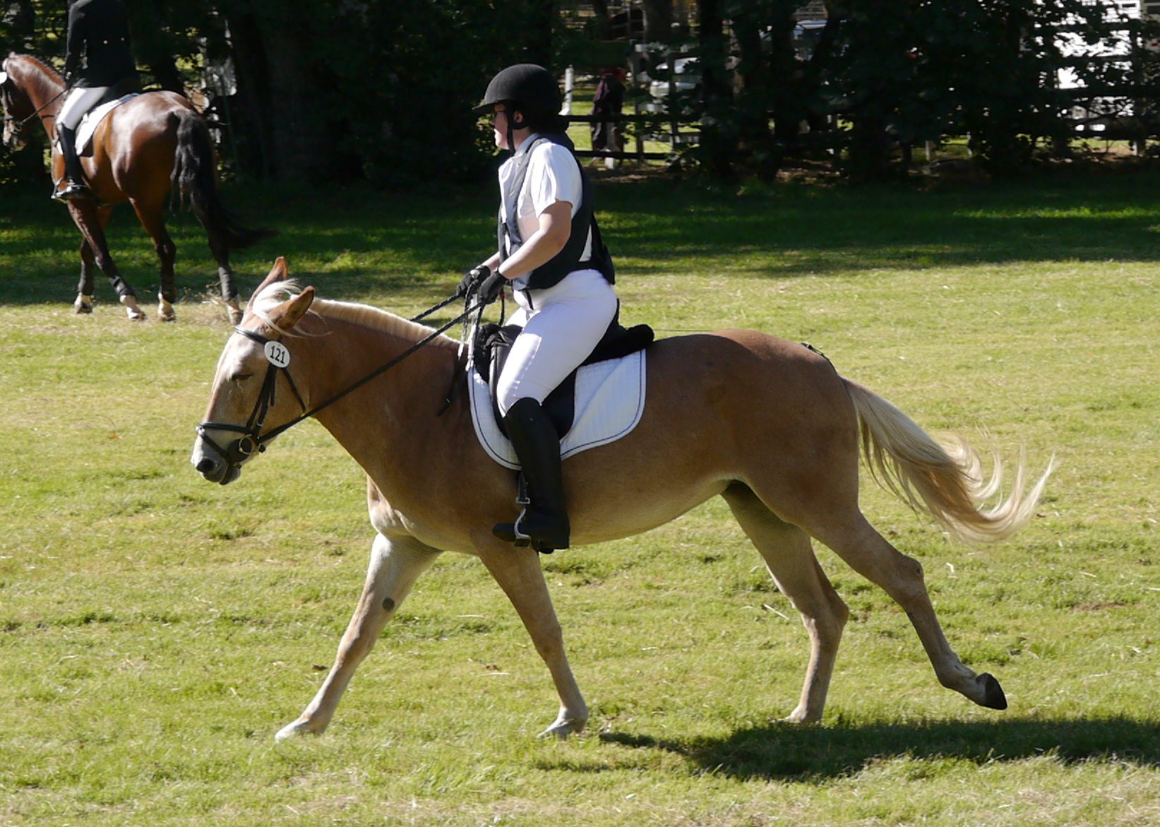 This is a dressage canter, right?