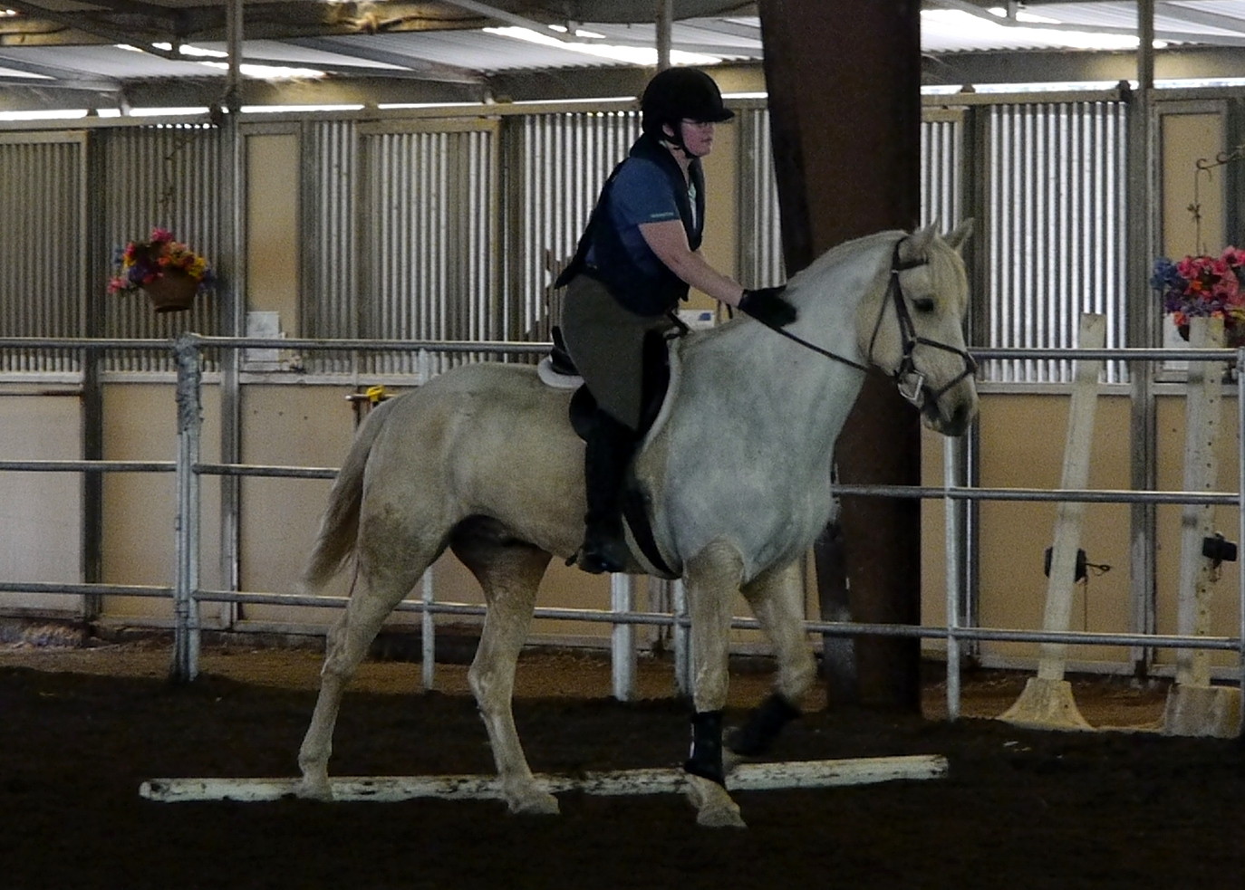 Lots of pats for Mustangs who don't kill their riders