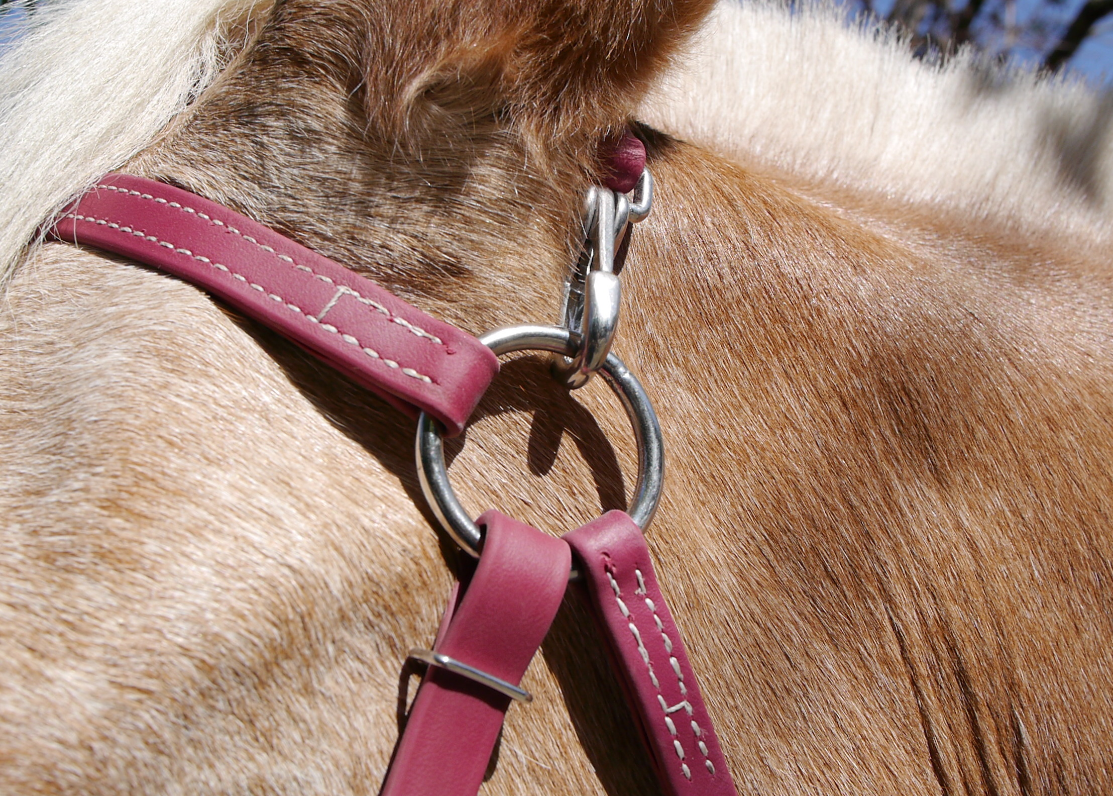 Two Horse Tack Mule Bridle Clip