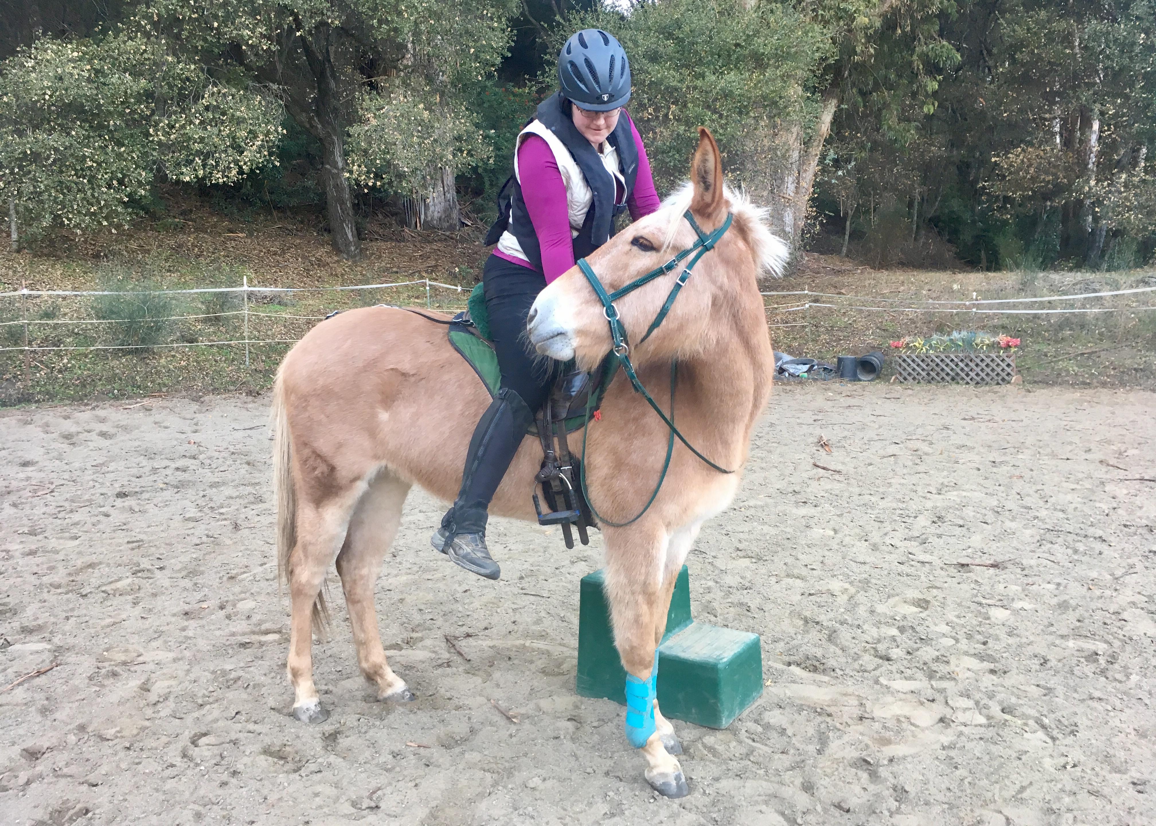 Mule riding diy horse ownership nilla update solutioingenieria Gallery