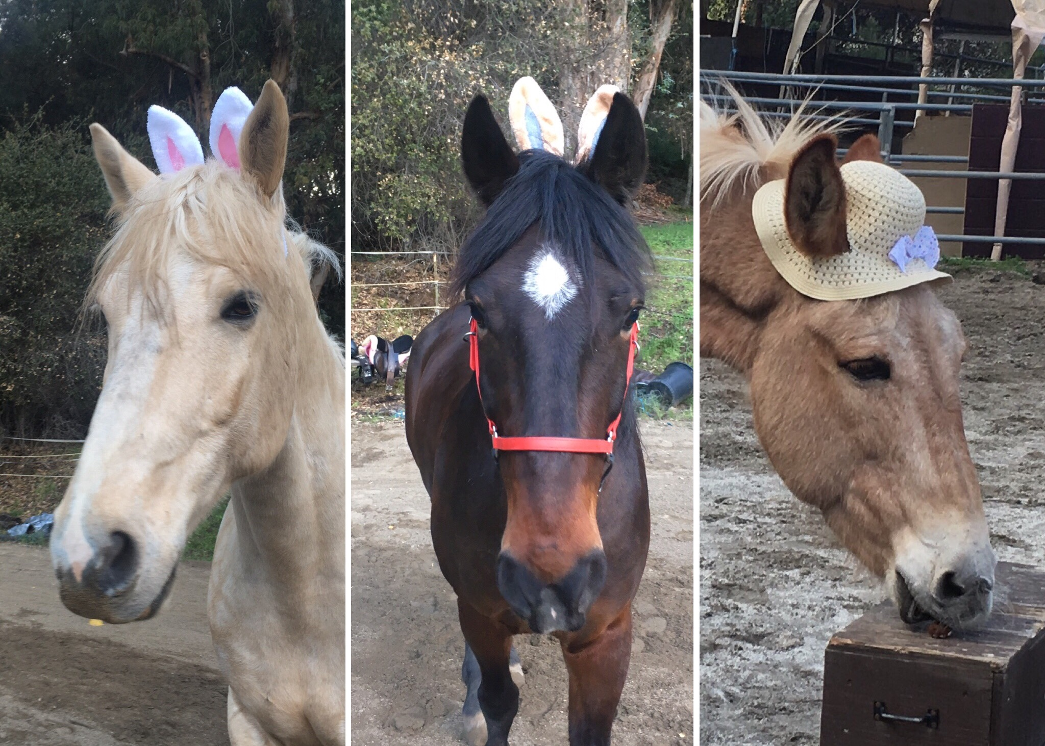 Do it yourself diy horse ownership easter egg hunt for horses solutioingenieria Gallery